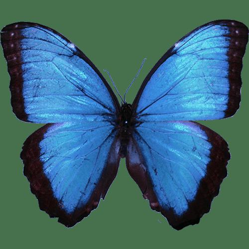 Butterfly Fields: